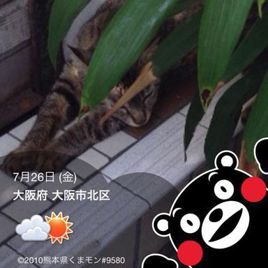 くまモンキャラクターフレーム1