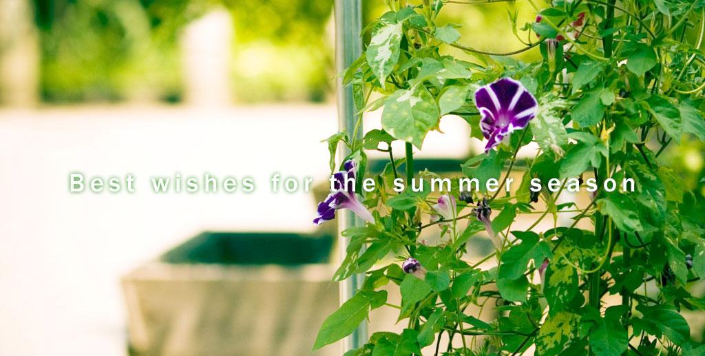 夏期休業のお知らせ:朝顔の写真